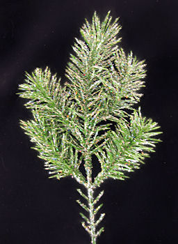Glittered Angel Pine Pick